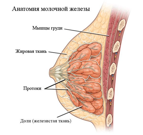 гинекология фкм что это