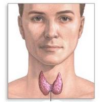 Биопсия узлового зоба щитовидной железы